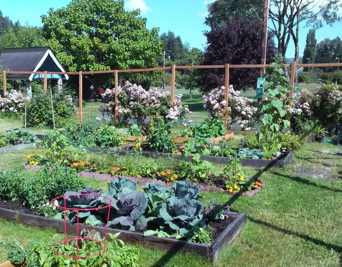 community garden photo.jpg